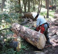Photo: You could have built a house with this log
