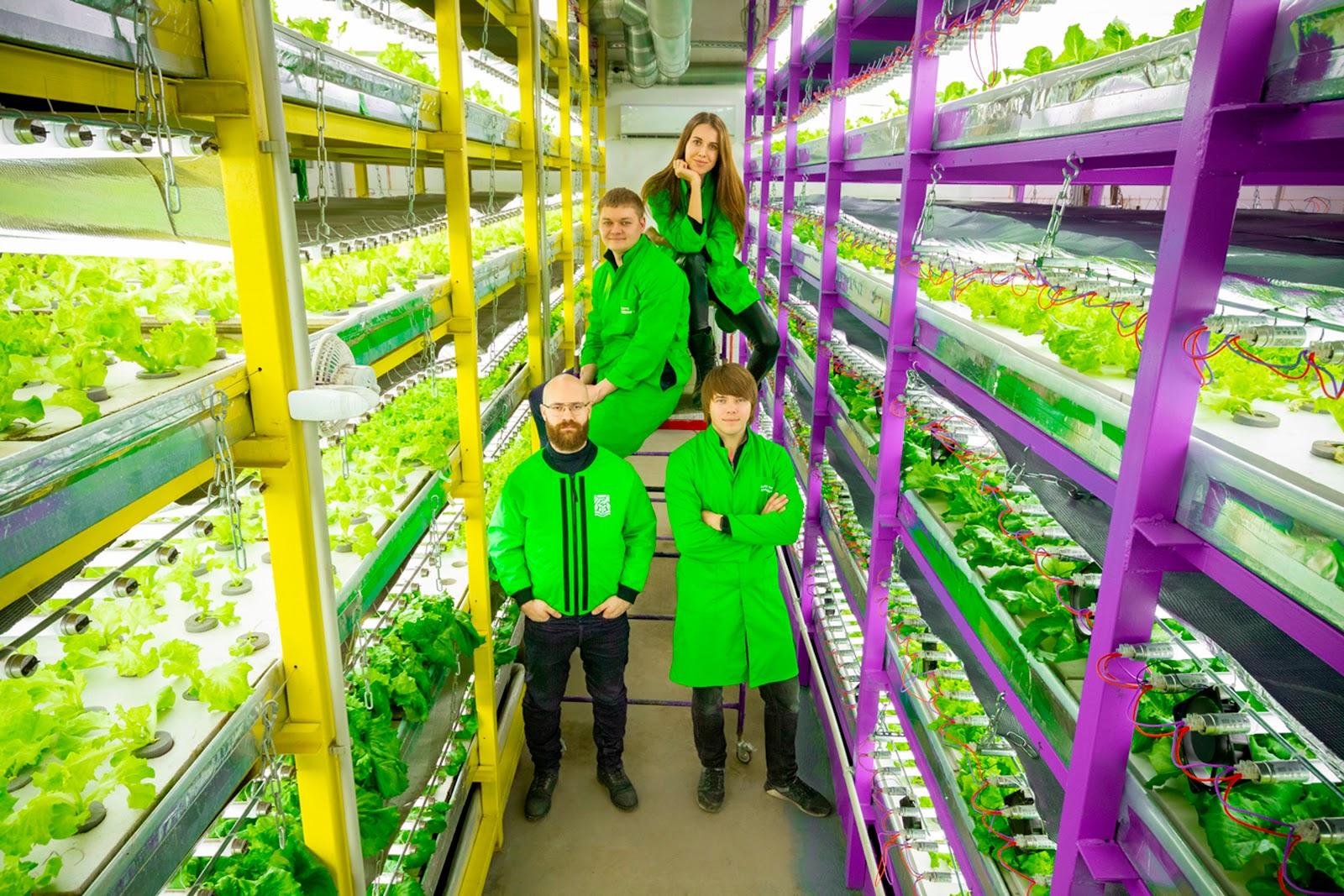 Урожай без земли: можно ли сделать ферму в городском подвале? Спойлер - легко!