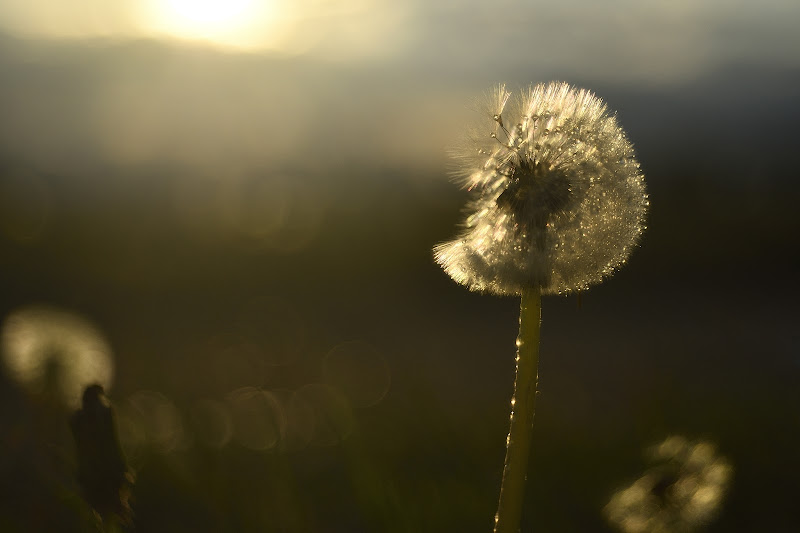 La magia del vento.... di Matteo Faliero
