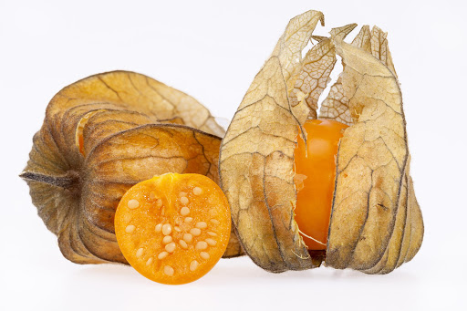 The fossil bears a strong resemblance to the Cape gooseberry.