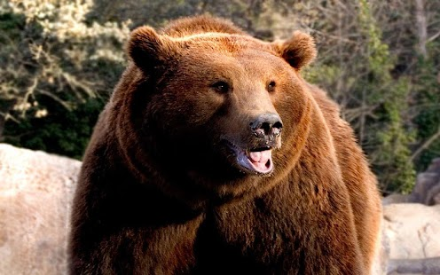 Bear Sounds Live Wallpaper - náhled