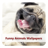 Funny Animals Wallpapers #1