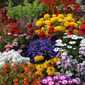 Flower arrangments by Gautam Tarafder - Flowers Flower Arangements (  )