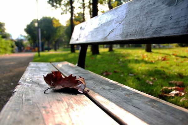 Autumn leaf di Vincenzo_ev