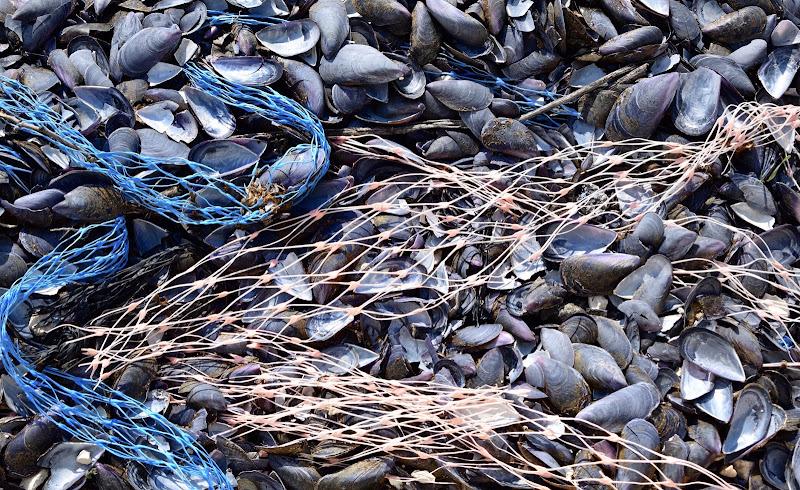 Mitili di Tonio-marinelli