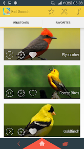 Bird Sounds Ringtones 1.12 Mod APK Download 3