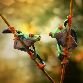 With You Beibh by Hindra Komara - Animals Amphibians ( concept, animals, macro, photograph, macro photography, digital art, art, photographer, frogs, photography, photooftheday )