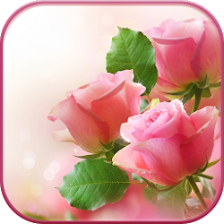 HD Pink Roses Live Wallpaper
