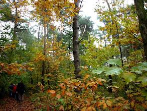 Photo: vele herfstkleuren in de natuur