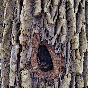 Healing Wounds by Brad Lehigh - Nature Up Close Trees & Bushes