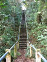 Photo: Regularmente temos que podar toda a vegetação para que o acesso nao seja invadido.