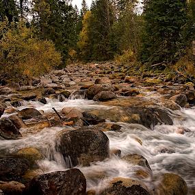 nedotknuta priroda by Ján Hrmo - Nature Up Close Water ( trava, les, priroda, skaly, stromy, voda )