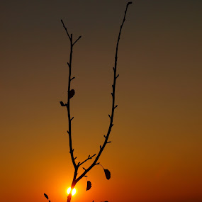 Roasted Sunset by Vanessa Latrimurti - Landscapes Sunsets & Sunrises ( orange, smooth, warm, passionate, rich, colorado, leaf, leaves, gradiant, sun, clear, red, sunset, fall, branch, deep, latrimurti )