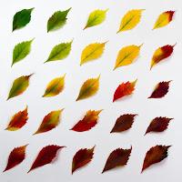 gradiente di foglie di
