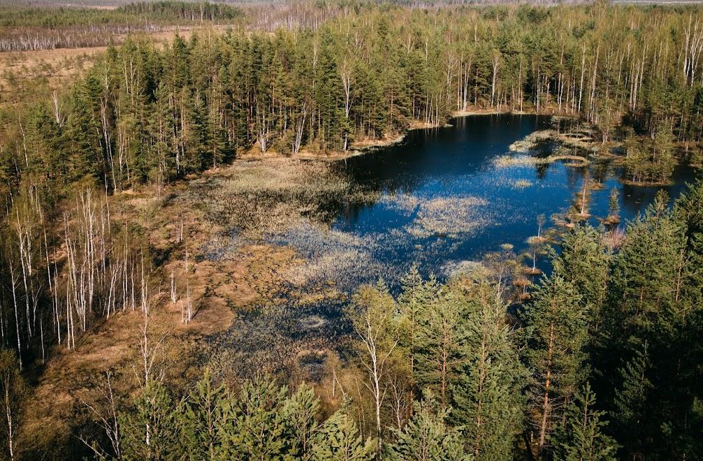 Заросшее озерцо на полигоне