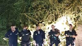 Agentes con las plantas incautadas.