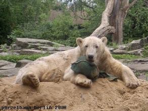 Photo: Eignet sich auch gut als Kopfstuetze, findet Knut ;-)