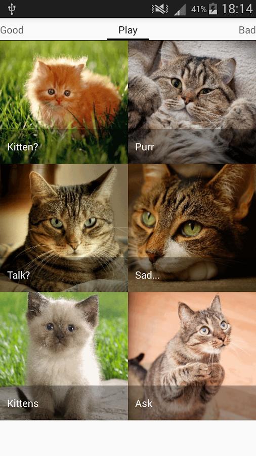 cat breeders philadelphia