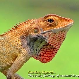Garden lizard... by Asif Bora - Typography Quotes & Sentences