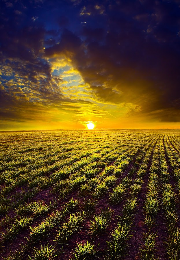 Spring by Phil Koch - Landscapes Prairies, Meadows & Fields ( summer. spring, vertical, wisconsin, natural light, photograph, farmland, yellow, phil koch, leaves, spring, sun, photography, farm, love, nature, autumn, ice, snow, horizons, flowers, inspired, clouds, office, orange, green, twilight, agriculture, horizon, scenic, morning, portrait, field, environment, red, winter, season, blue, national geographic, sunset, serene, peace, fall, meadow, earth, sunrise, landscapes, floral, inspirational,  )