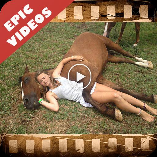 Смешные видео и картинки для ватсапа