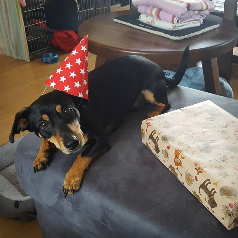 Verjaardagscadeau Hond