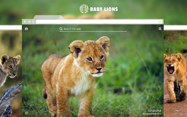 Baby Lions Hd Wallpaper New Tab Theme Chrome Web Store