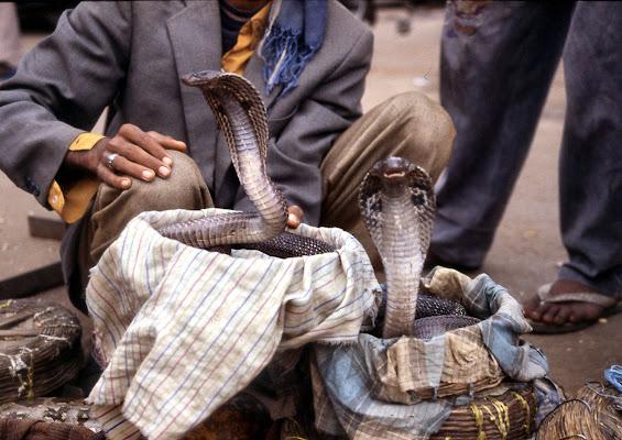 incantatore di cobra di smpaint