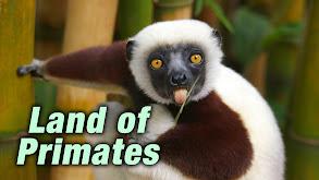 Land of Primates thumbnail