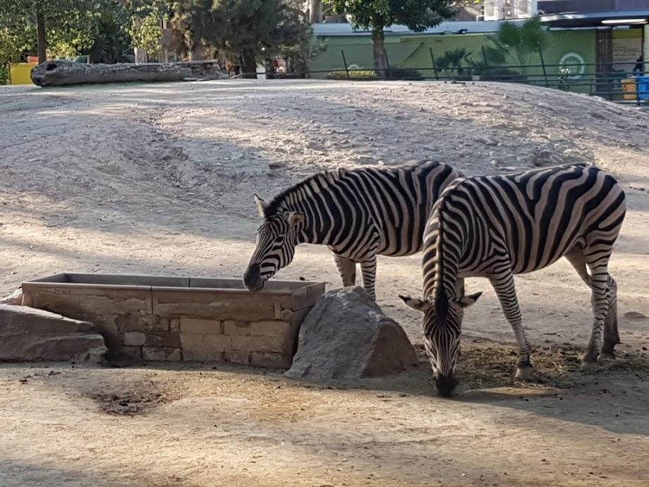 Foto Zoo Barcelona 16