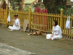 Photo: The wat (temple) pets. They are so relaxed, except one dog who was a barker, they were all pretty chill.