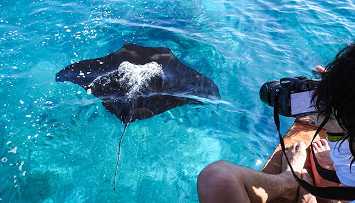 Snorkeling Manta ray nusa penida
