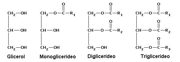 ca_lipides4 2.JPG
