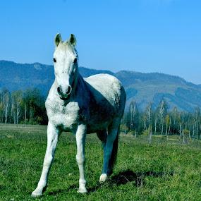 by Lili Screciu - Animals Horses