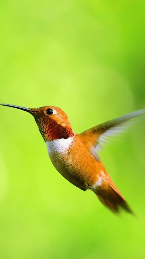 تطبيق يقدم صور طيور خلابة جدا لجعلها خلفية لجهازك و بسهولة فائقة unGFtVo5ZxucjuUsj5YN
