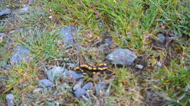 Photo: floue la salamandre.