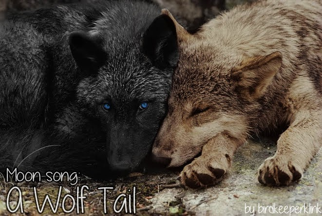 Header with a black wolf with blue eyes and a grey wolf lying together with title card