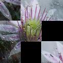Solvedrome HD icon