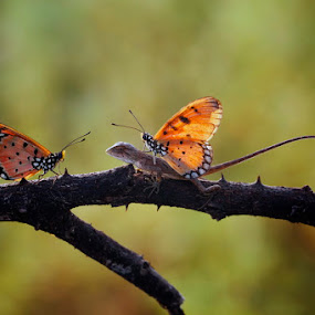 Lovely Friends by Asep Bowie - Animals Insects & Spiders ( butterfly, macro art syndicate, macro, macro photography )