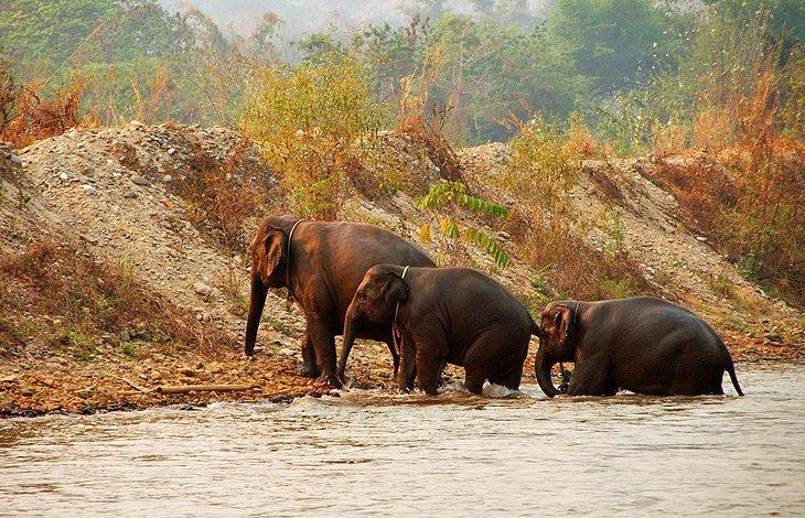 C:\Users\jawadz\Desktop\chiang mai\thailand-chiang-mai-elephant-nature-park.jpg
