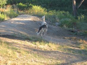 Photo: Yoga Farm, CA - llamas