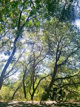 Photo: Fabulous trees.