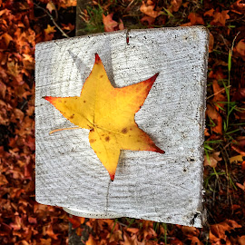 On The Post by Geoffrey Wols - Instagram & Mobile iPhone ( fall, leaves, autumn,  )