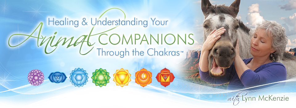 Healing & Understanding Your Animal Companions Through The Chakras