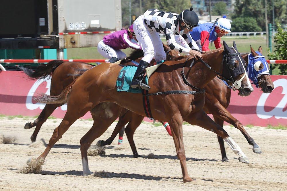Arabia Wild (Arabian Spirit) se queda con la victoria en Handicap (1100m-Arena-VSC).