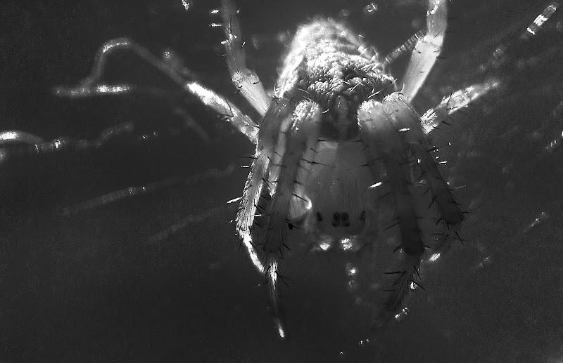 Nella stretta morsa del ragno di _Chiara_