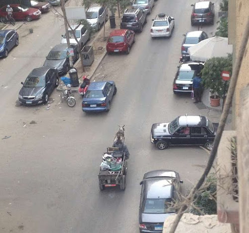 A Donkey Cart in traffic in Cairo Egypt