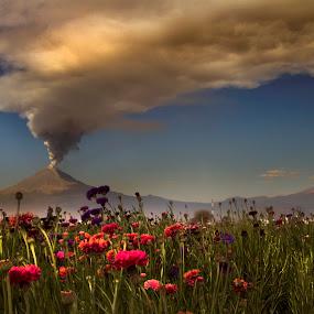 Popocatepetl snd big smoke by Cristobal Garciaferro Rubio - Landscapes Mountains & Hills ( field, volcano, popocatepetl, flowers, smoking volcano, flower )