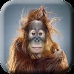 Crazy Monkey Dance LiveWP
