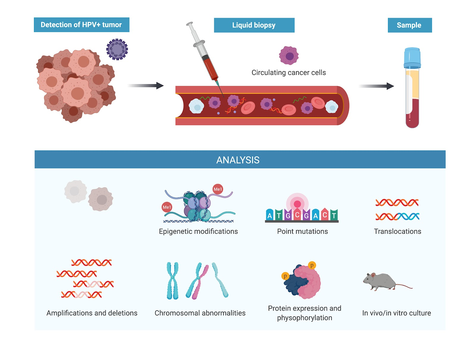 papillomavirus dna detection)